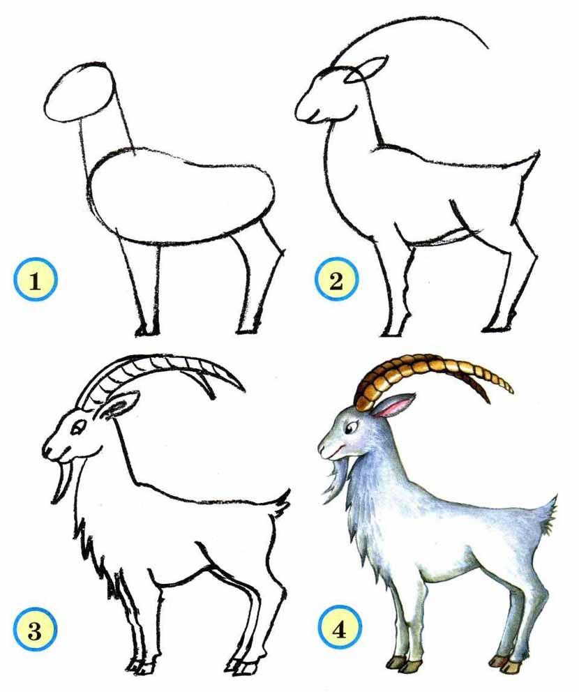 Нарисовать поэтапно животных, козел