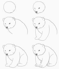 Нарисовать поэтапно животных, медведь