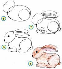 Нарисовать поэтапно животных зайца