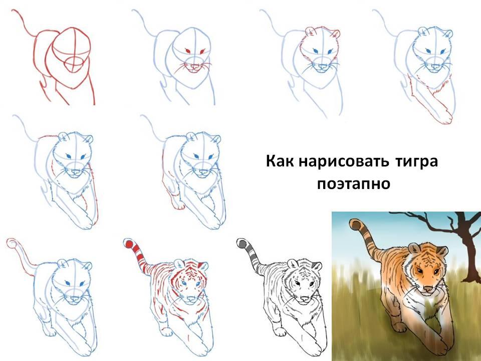 Нарисовать поэтапно животных, тигра
