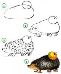 Нарисовать поэтапно животных, ежик с яблочком