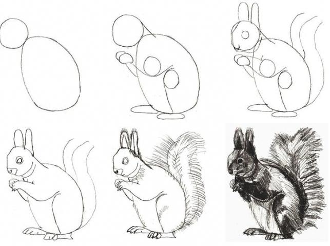 Нарисовать поэтапно животных, белка