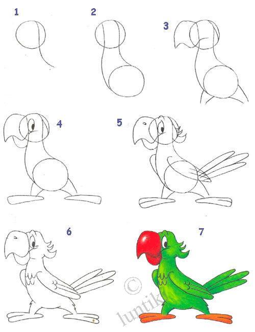 Нарисовать поэтапно животных, попугай
