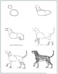 Нарисовать поэтапно животных, собака