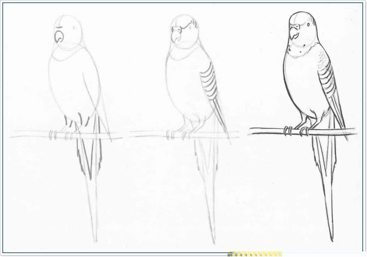 Карандашом попугаи поэтапно