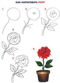 Нарисовать поэтапно розу