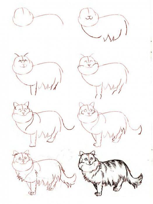 Нарисовать поэтапно животных, длинношерстная пестрая кошка
