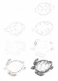 Нарисовать поэтапно животных, морская черепаха
