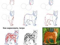 Нарисовать поэтапно животных, тигр