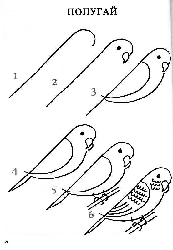 Нарисовать поэтапно животных, попугайчик