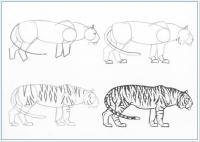Нарисовать поэтапно животных, крадущийся тигр