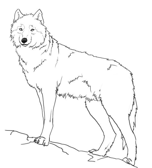 Нарисовать поэтапно животных, волк на скале