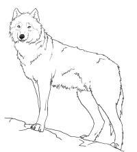 Нарисовать поэтапно животных