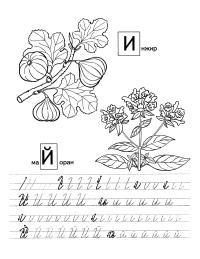 Прописи для дошкольников буквы и, й с раскрасками растения