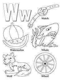Буква w, часы, арбуз, акула