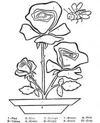 Обучающие раскраски, розы