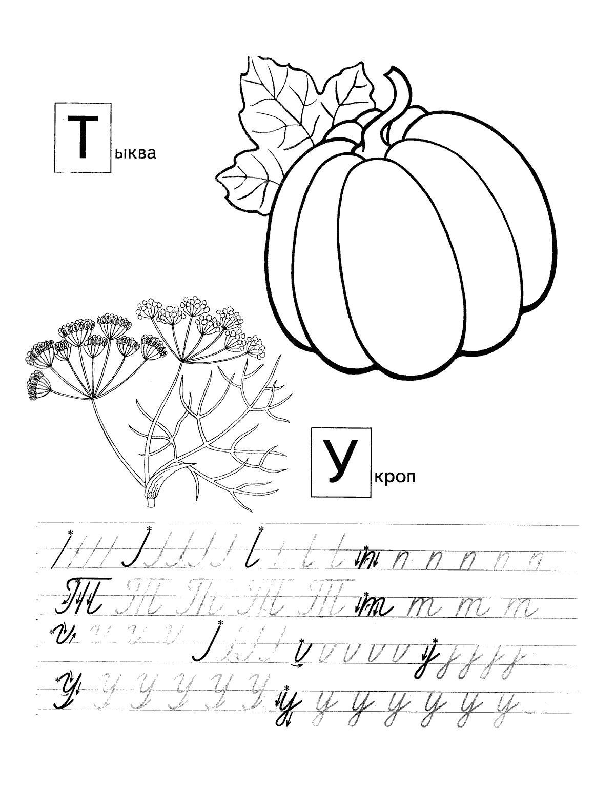 Прописи для дошкольников, раскраски овощи и зелень, тыква, укроп, пропись буквы т, у