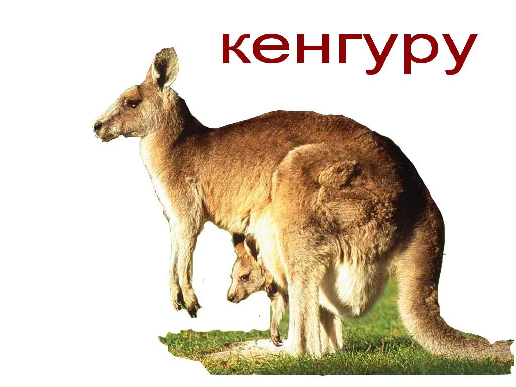 Звук кенгуру скачать бесплатно