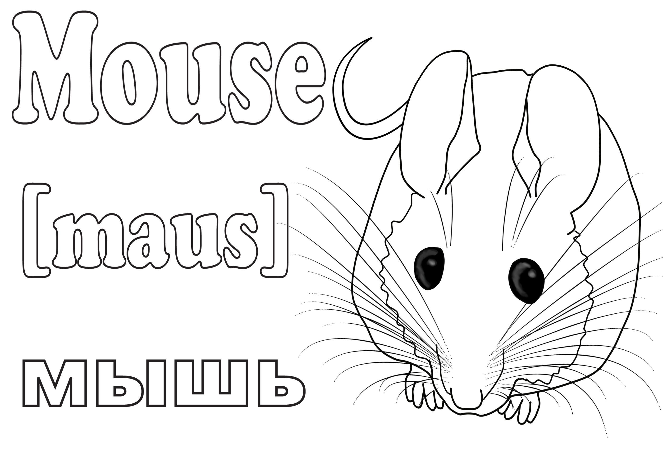 Учим животных раскраски, мышь по английски