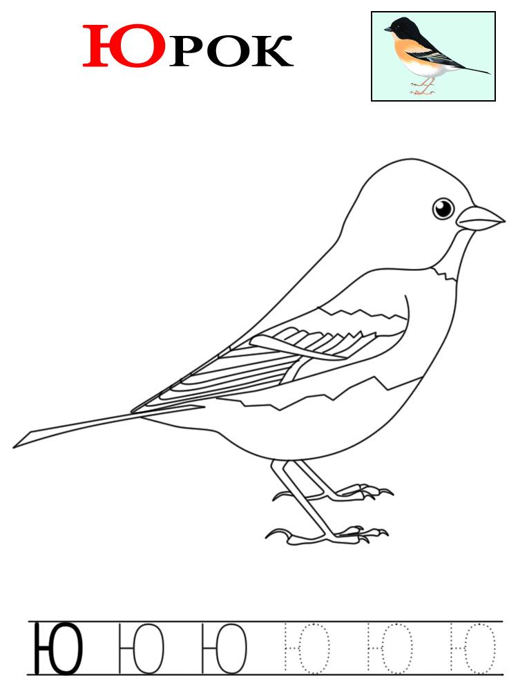 Буква ю, юрок птица