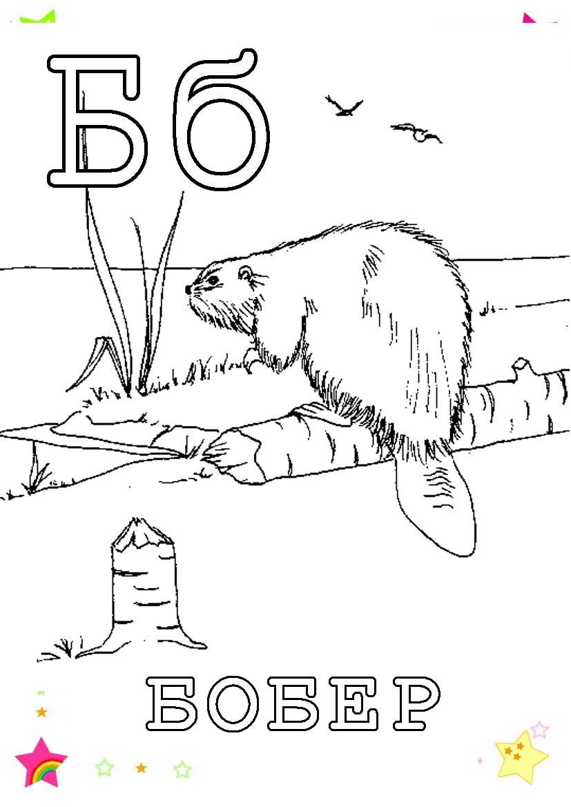 Буква б, бобер