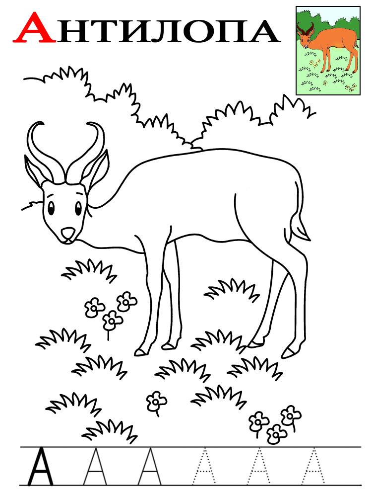 Буква а, антилопа