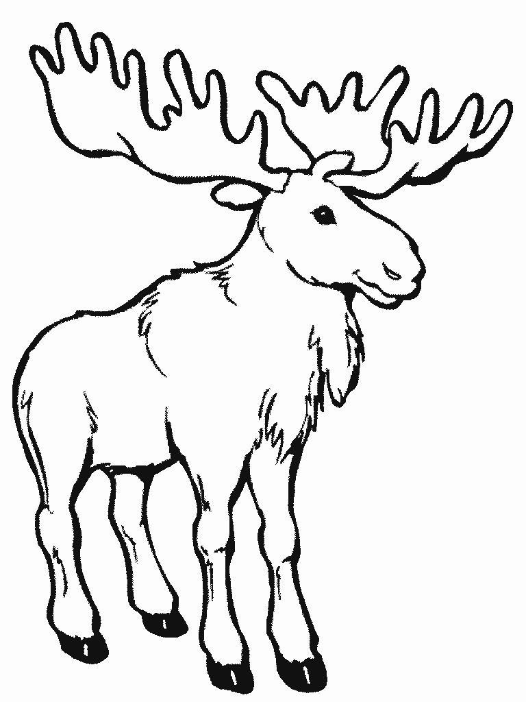 Учим животных раскраски, лось
