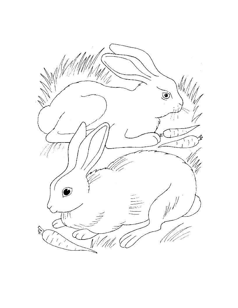 Учим животных раскраски, зайцы