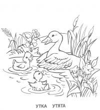 Учим животных раскраски, утка с утятами