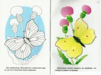 Раскрась по образцу бабочку на цветке