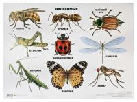 Пчела, муравей, майский жук