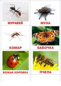 Муравей, муха, комар
