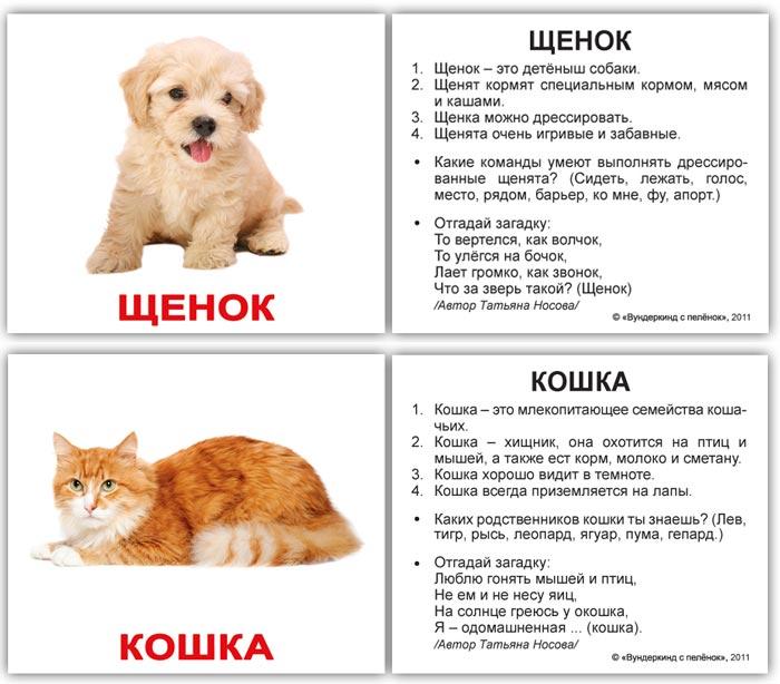 Щенок, кошка