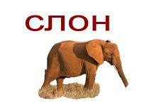 Карточки дикие животные, слон