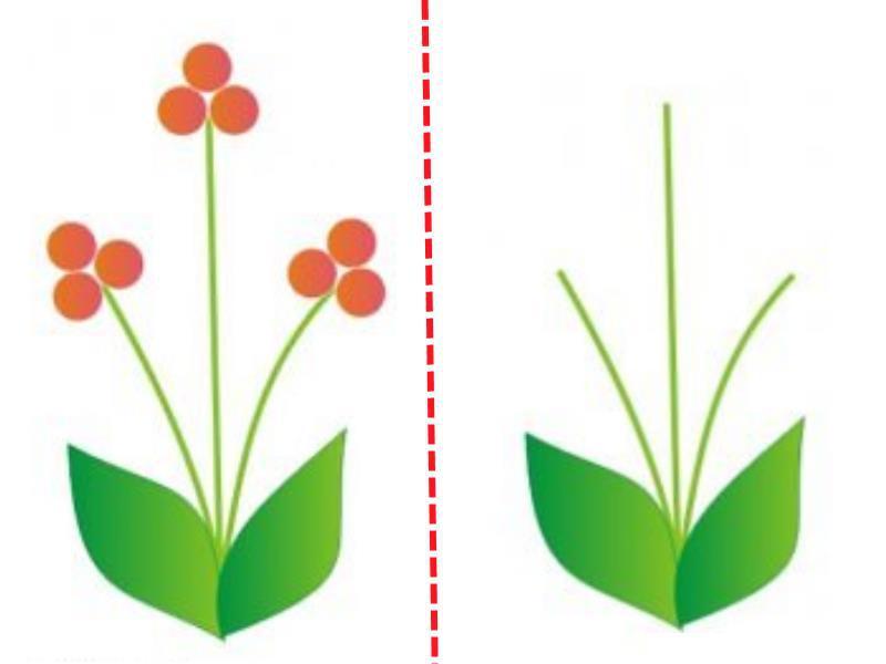 Три цветочка