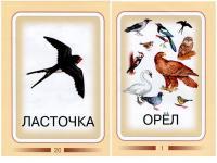 Карточки птицы