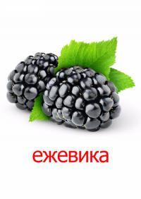 Еживика
