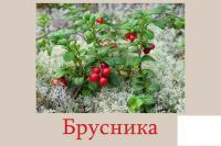 Карточки ягоды