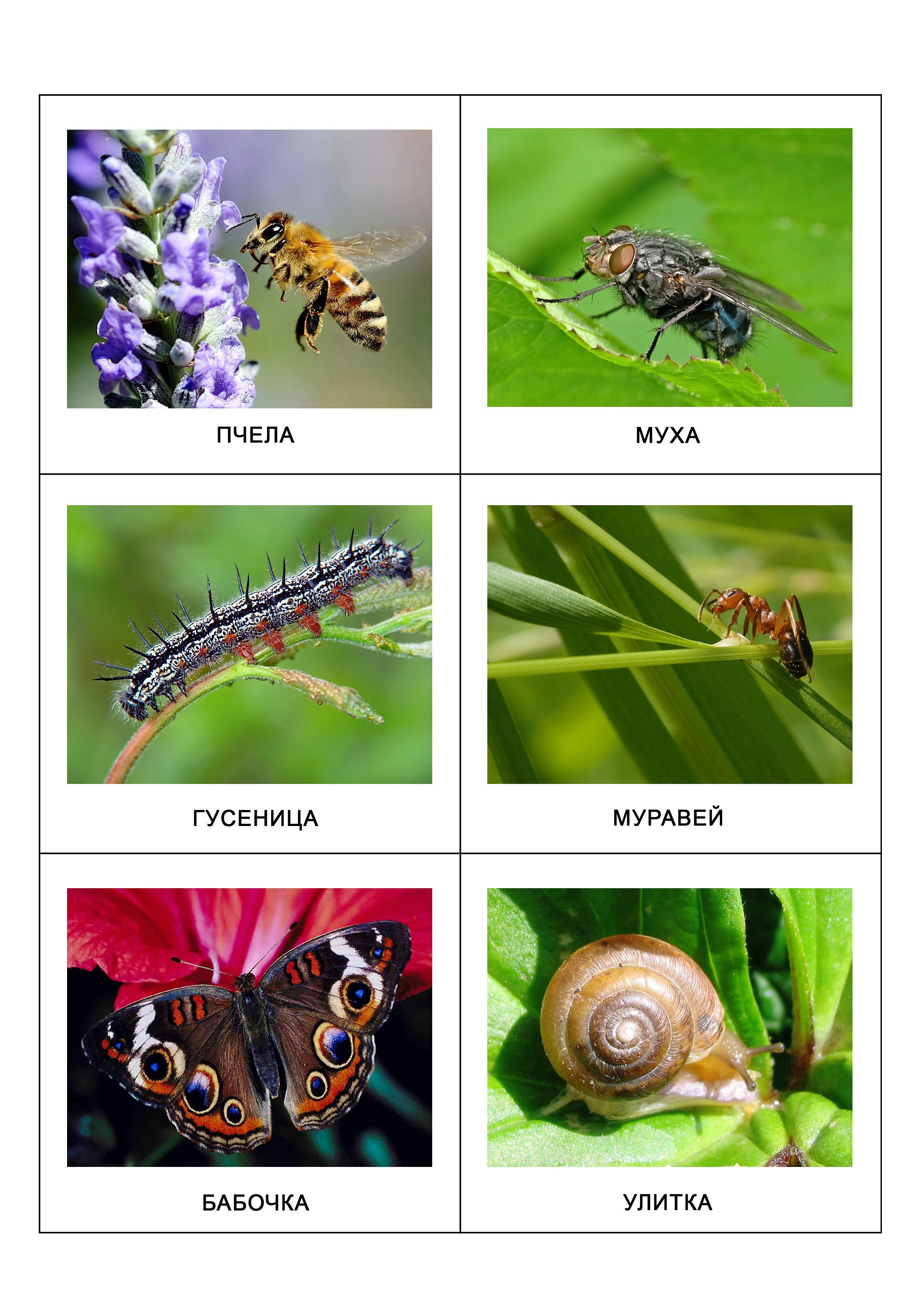 Пчела, муха, гусеница, муравей, бабочка, улитка
