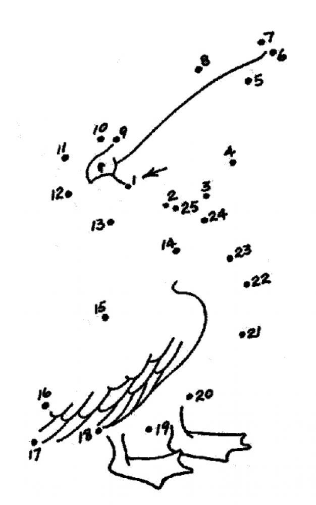 Соедини по точкам, пеликан