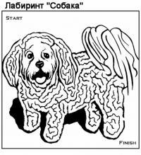 Раскраска лабиринт собачка