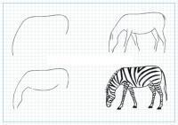Нарисовать поэтапно животных, зебра