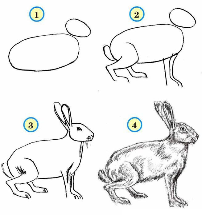 Нарисовать поэтапно животных, серый заяц