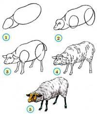 Нарисовать поэтапно животных, пушистый барашек