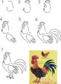 Нарисовать поэтапно животных петуха