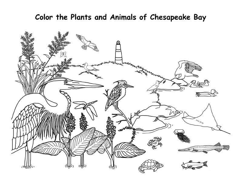 Обучающие раскраски, птицы и рыбы