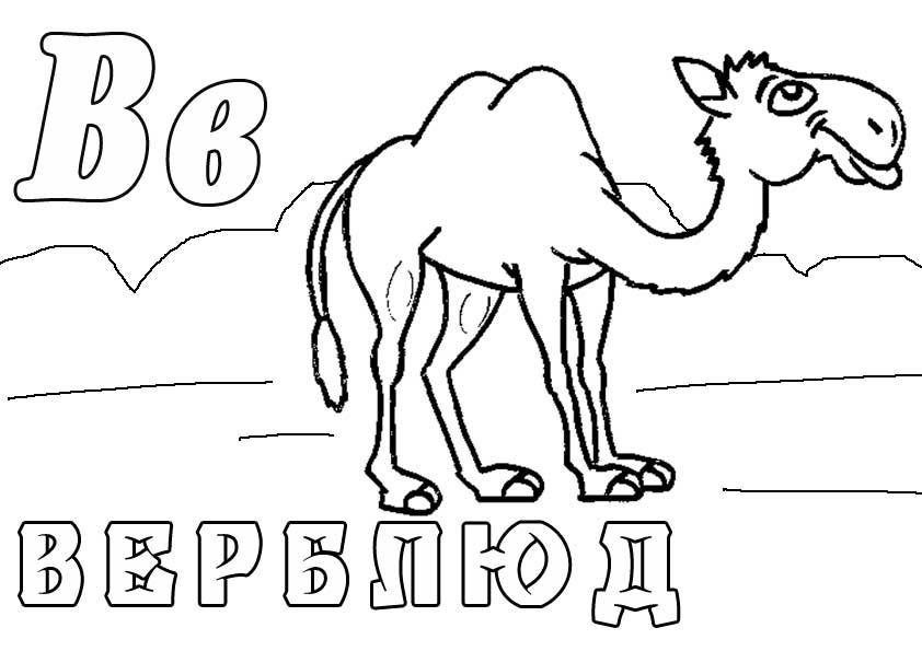 Буква в, верблюд