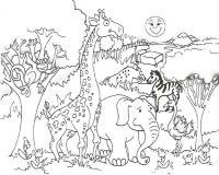 Учим животных раскраски, джунгли