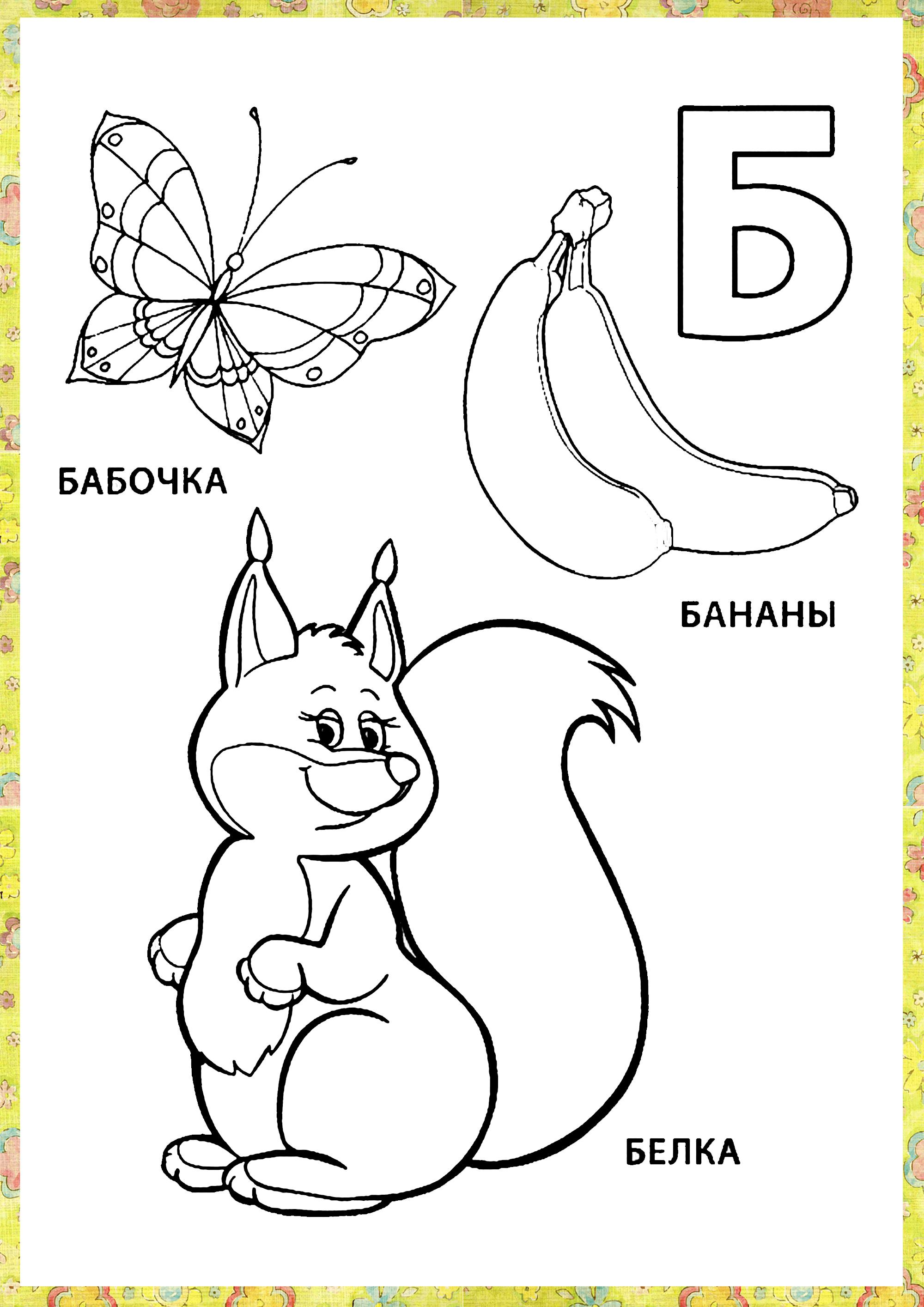 Буква б, бабочка, банан, белка
