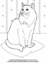 Учим животных раскраски, сибирская кошка